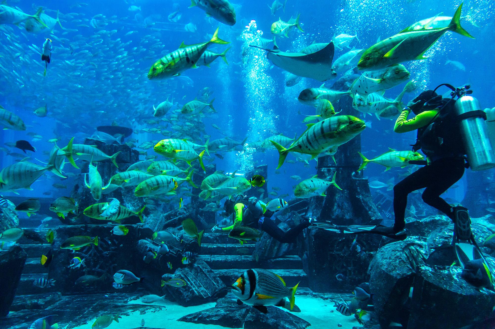 צלילה בדובאי